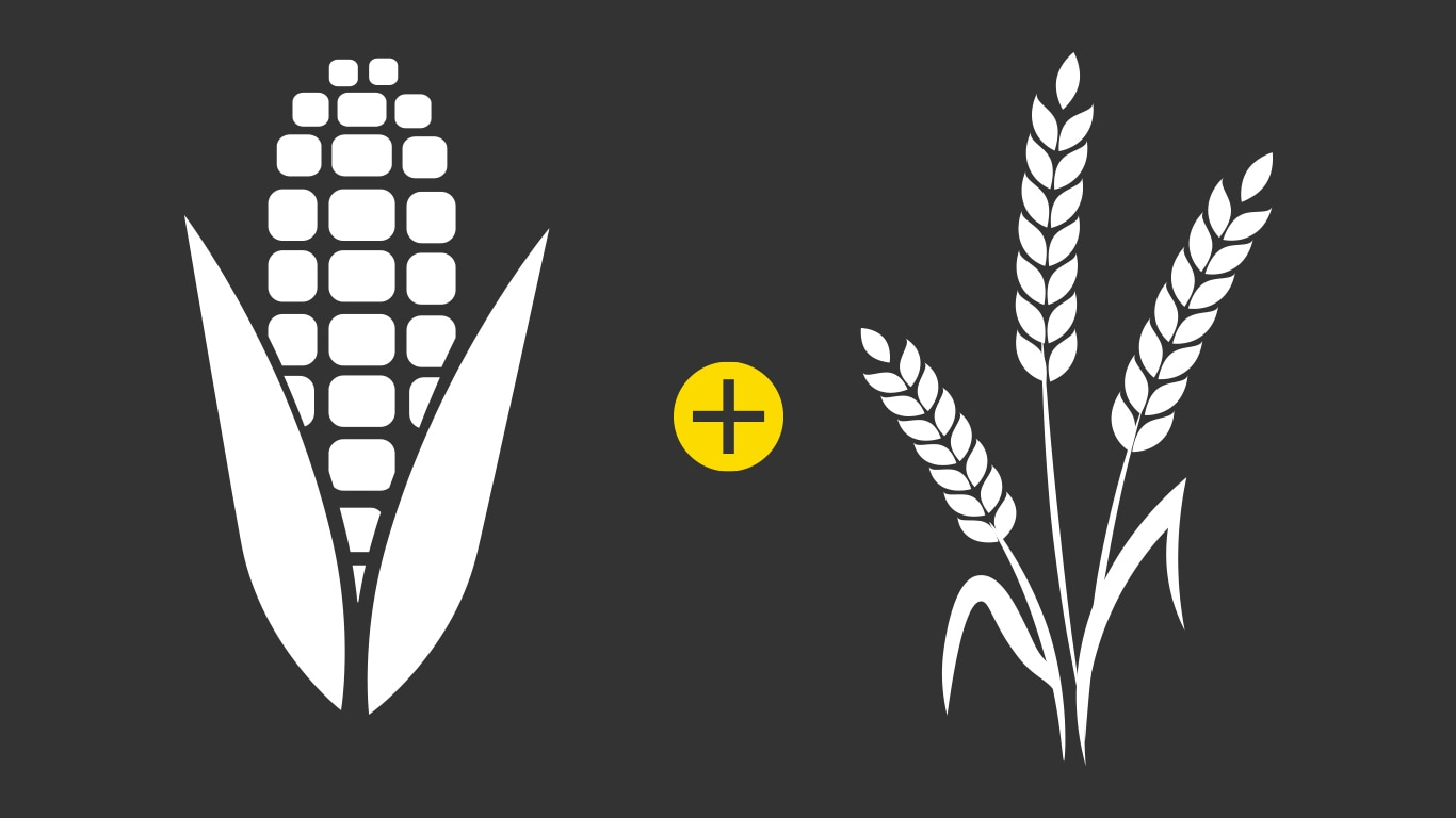 corn and wheat icons